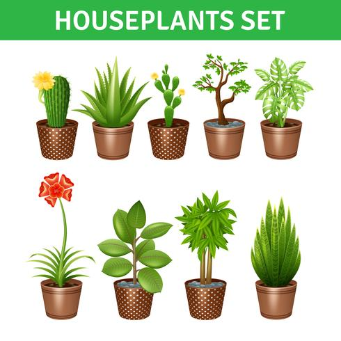 Set di icone realistiche Houseplants vettore