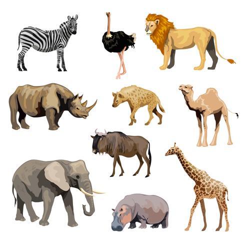 Set di animali selvatici africani vettore