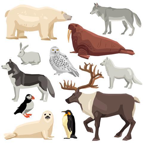Set di animali polari vettore