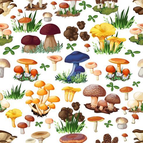 Modello senza cuciture di funghi vettore