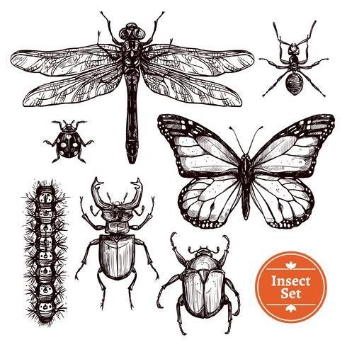 Set di insetti disegnati a mano vettore