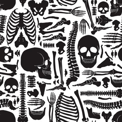 Modello scheletro di ossa umane vettore