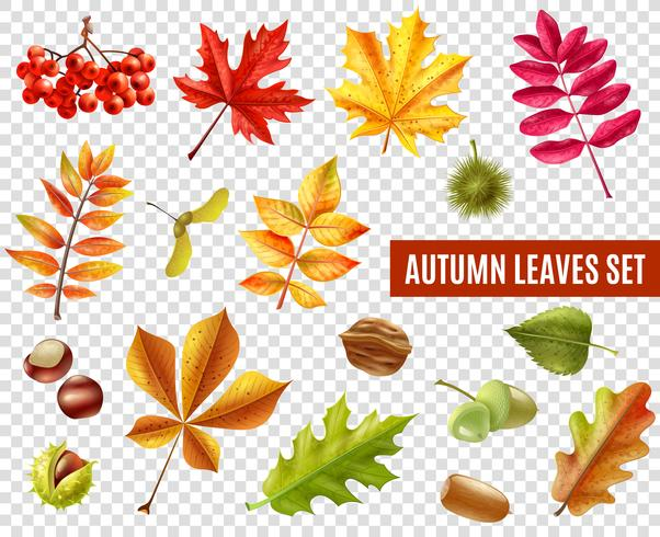 Set di foglie d'autunno trasparente vettore