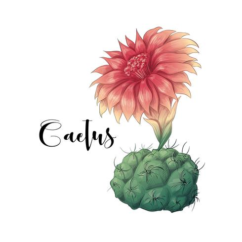 Cactus nel vettore e nell'illustrazione del deserto, stile disegnato a mano, isolato su fondo bianco.