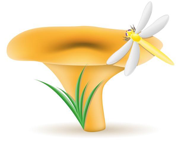 illustrazione vettoriale di funghi finferli