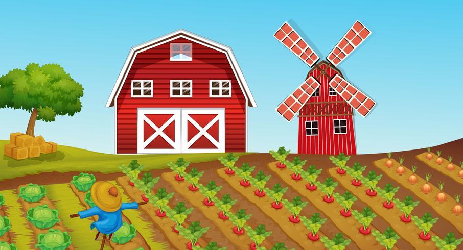 Terreno agricolo con colture nella fattoria vettore