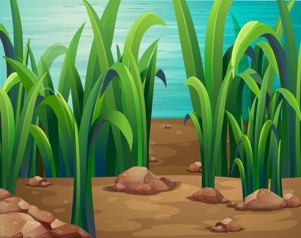 Piante verdi lungo il fiume vettore