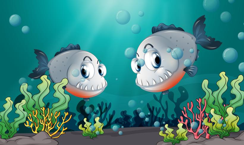 Due grandi pesci grigi sotto il mare vettore