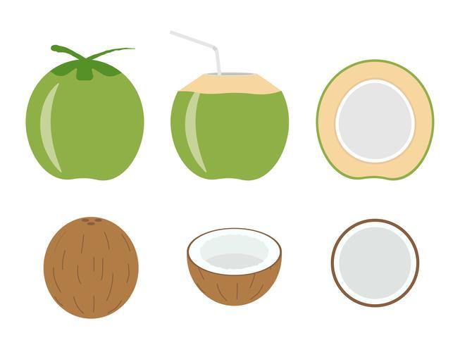 Illustrazione vettoriale di set cocco fresco isolato su sfondo bianco