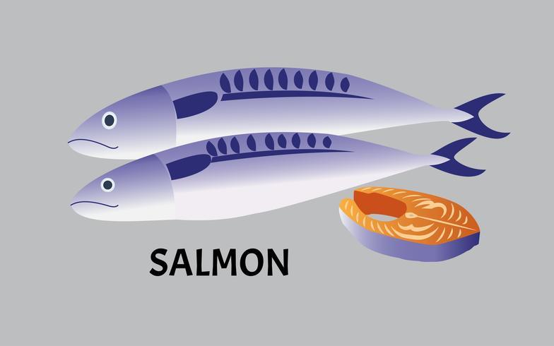 illustrazione vettoriale di pesce salmone isolato su sfondo