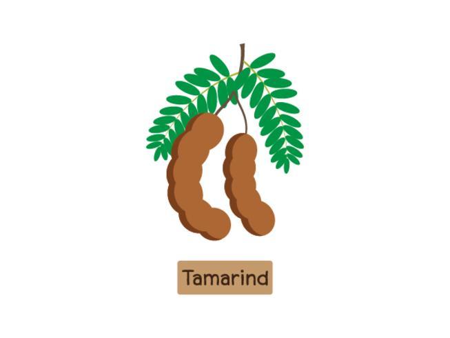 Vector l'illustrazione della frutta del tamarindo isolata su fondo bianco