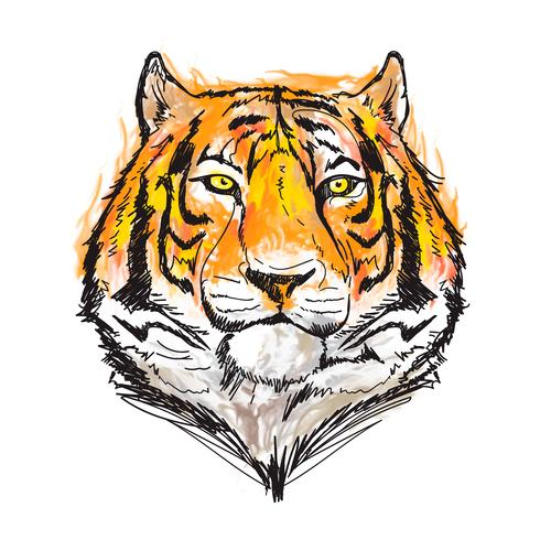 illustrazione vettoriale di tigre acquerello impressionante