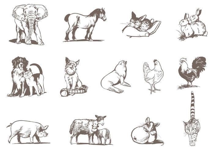 Animali e Zoo Pacchetto animali vettore