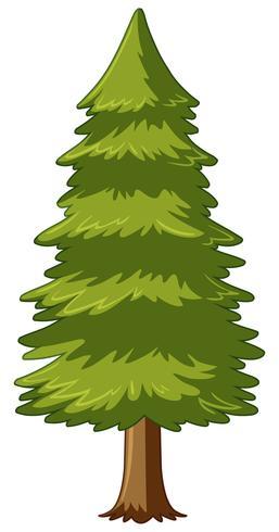 Albero di pino su sfondo bianco vettore