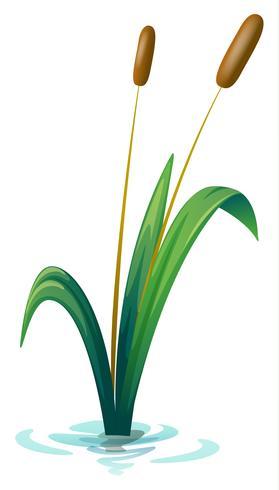 Una pianta vettore