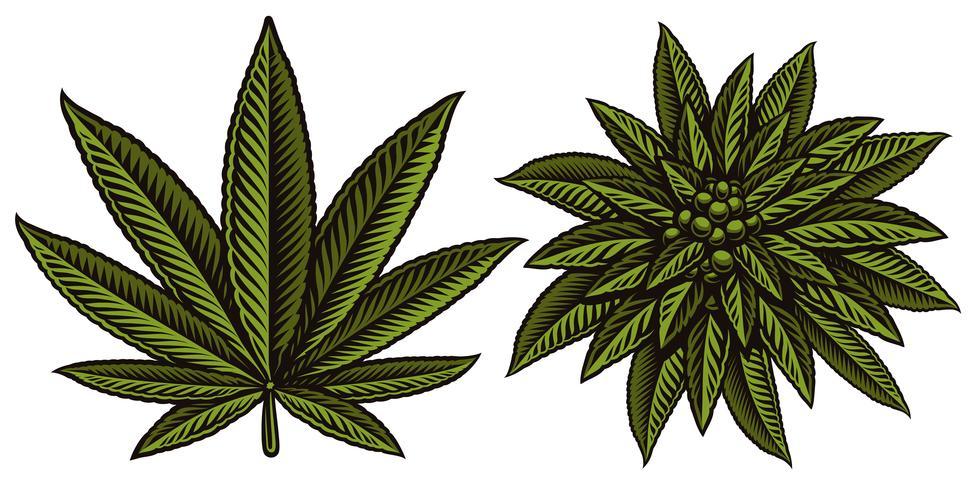 Illustrazione vettoriale di foglie di cannabis