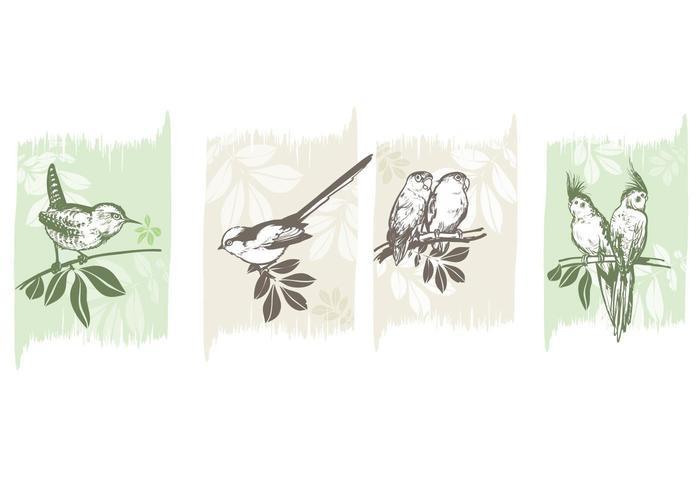 Pacchetto di vettore di uccelli su rami