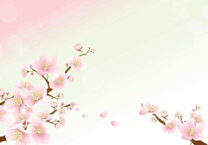 vettore di carta da parati fiore di ciliegio