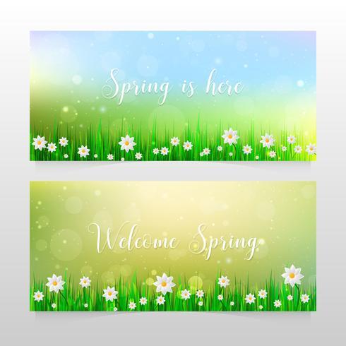 Banner di primavera con erba e fiori bianchi vettore