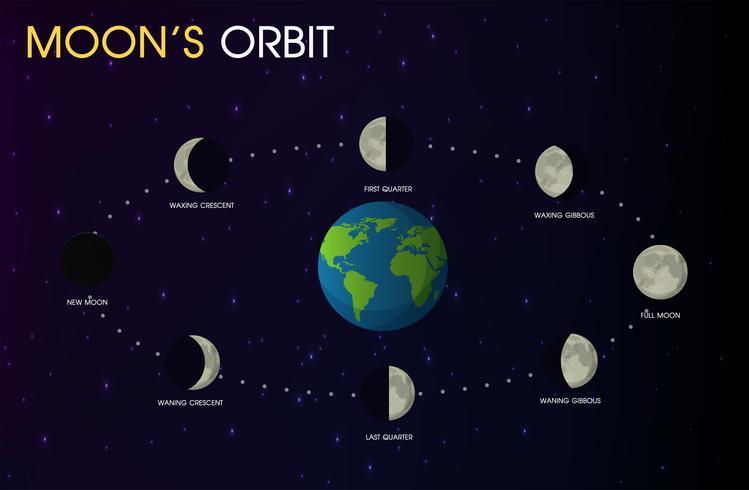 Le fasi della luna. vettore