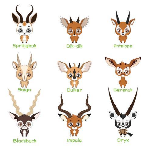 Set di specie di antilopi vettore