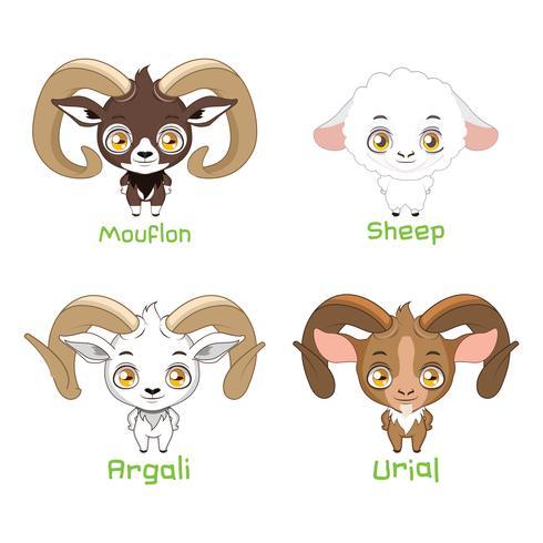 Set di specie di pecore vettore