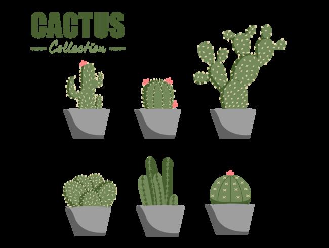 elemento di vettore di raccolta cactus piatto