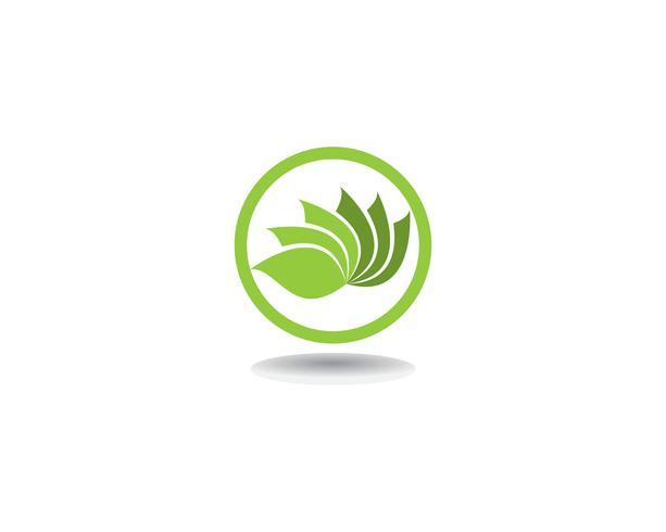 Vector le icone del modello di progettazione di logo dei fiori di Lotus di bellezza di vettore