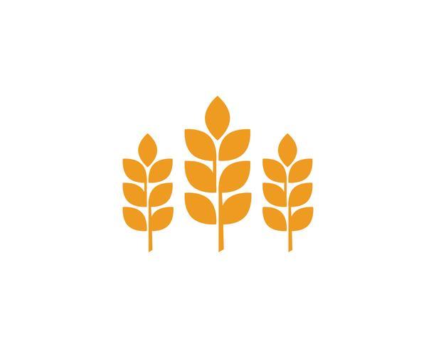 Agricoltura grano loghi vettore