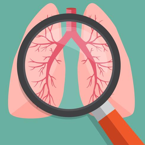 Lente d'ingrandimento sui polmoni. Illustrazione di vettore. vettore