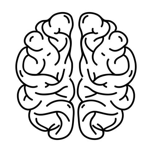 linea anatomia del cervello umano a creativo e intelletto vettore