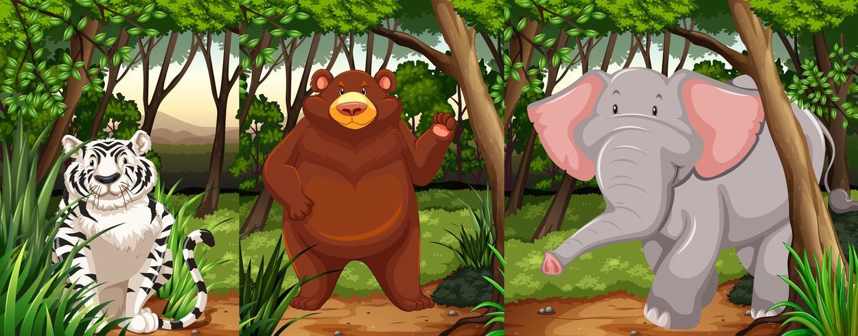 Animali della fauna selvatica nella giungla vettore