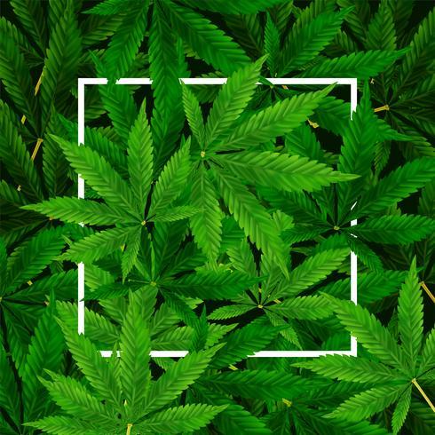 Sfondo di foglia di marijuana o cannabis vettore