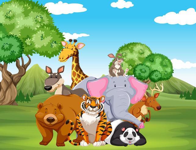 Animali selvaggi sul campo vettore
