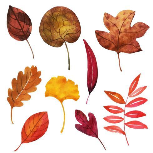 Collezione di foglie d'autunno vettore