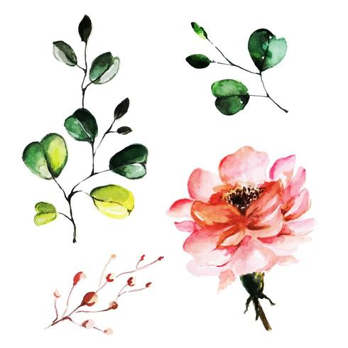 Bellissimo acquerello floreale e foglie vettore