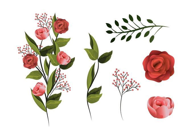 impostare piante di fiori tropicali con petali e foglie vettore