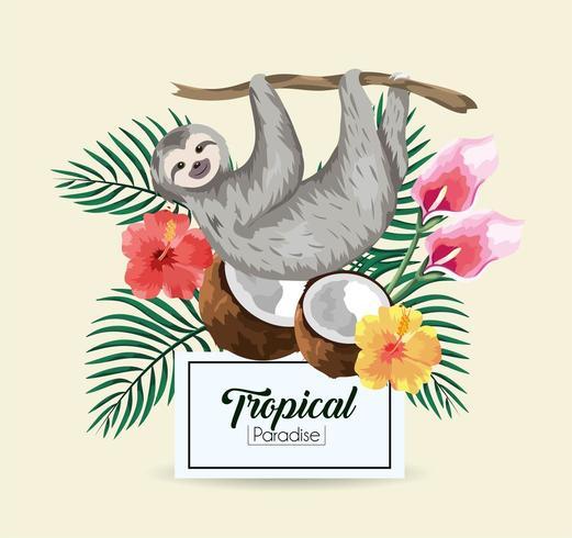 Bradipo con cocco tropicale vettore