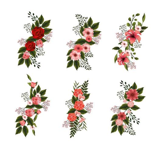 impostare piante di fiori naturali con petali e foglie vettore