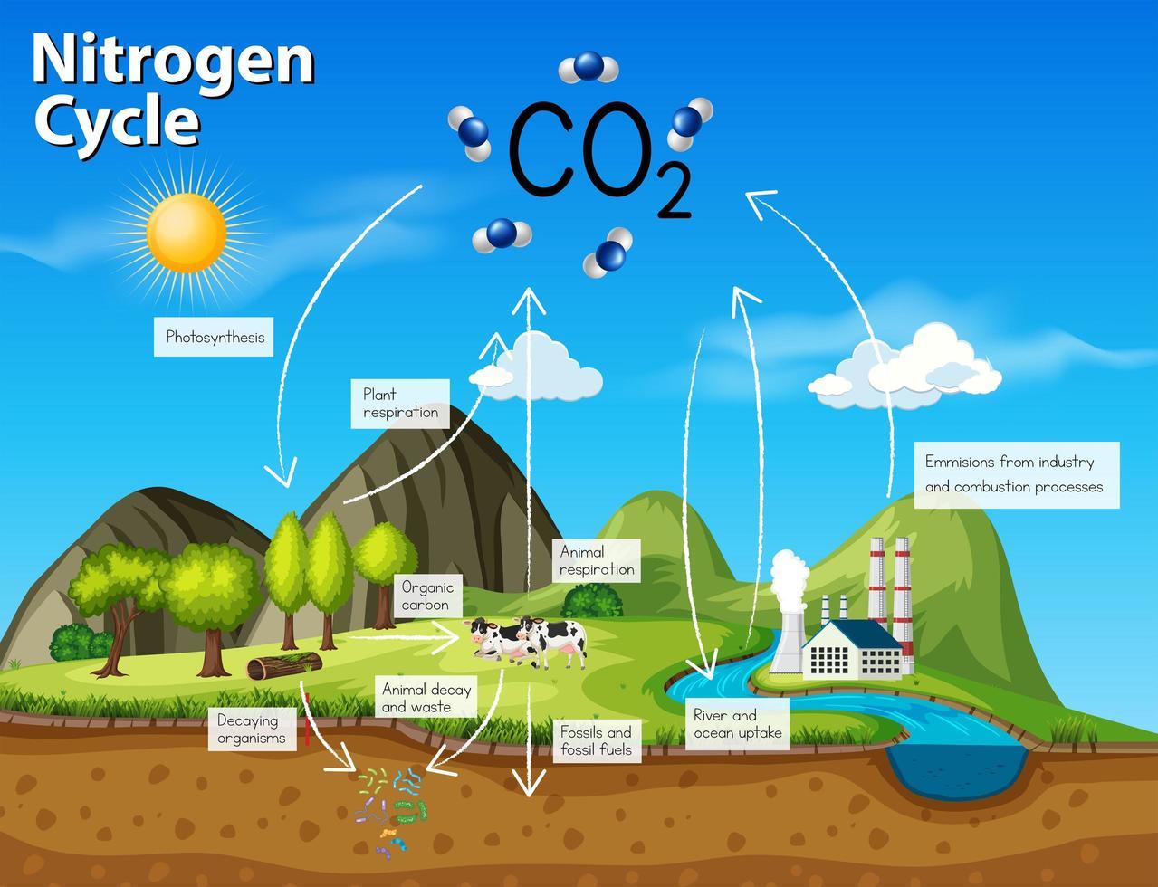 Scienza ciclo dell'azoto CO2 vettore