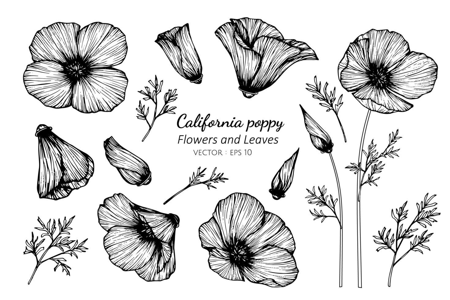 set di foglie e fiori di papavero california vettore