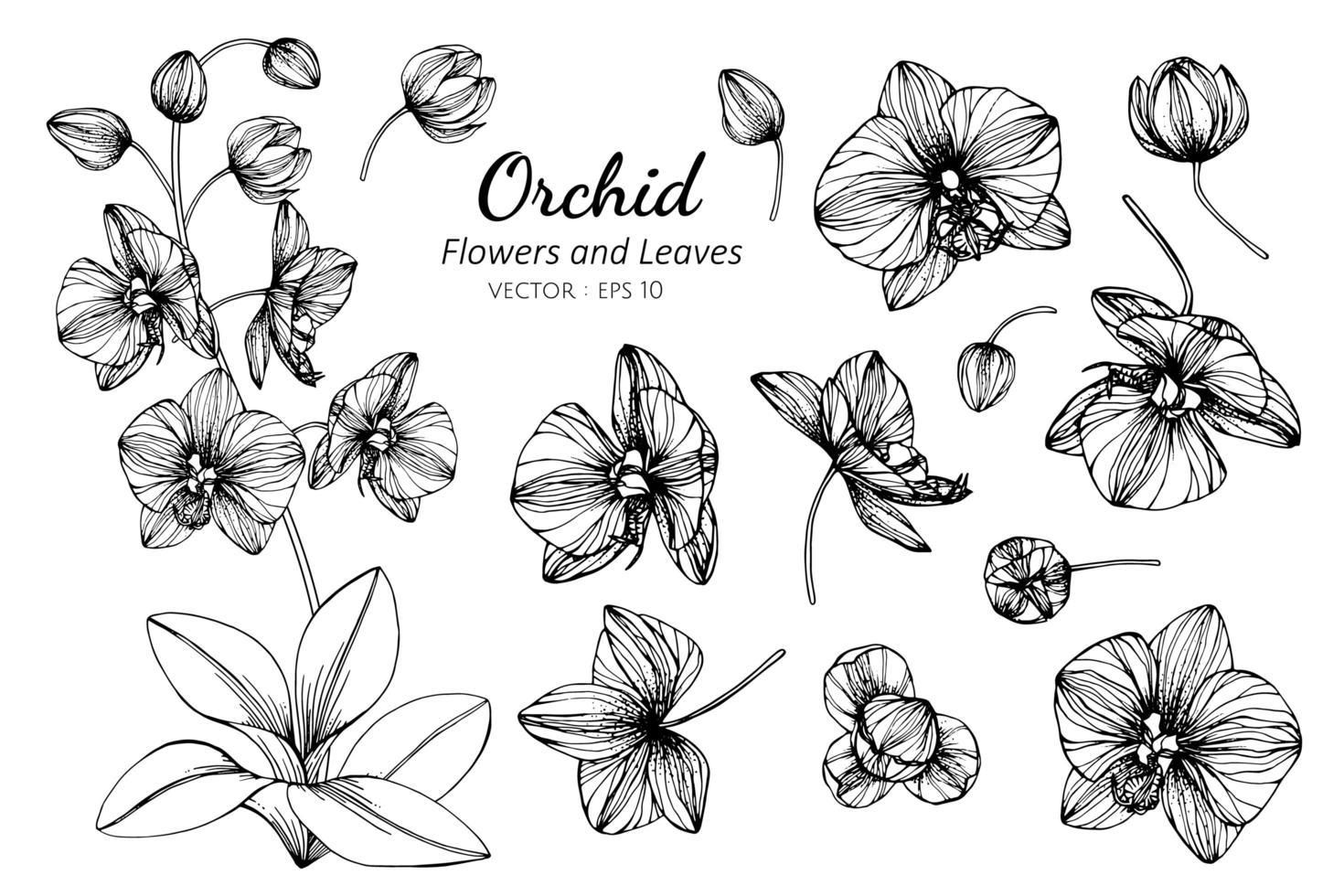 raccolta di fiori e foglie di orchidea vettore