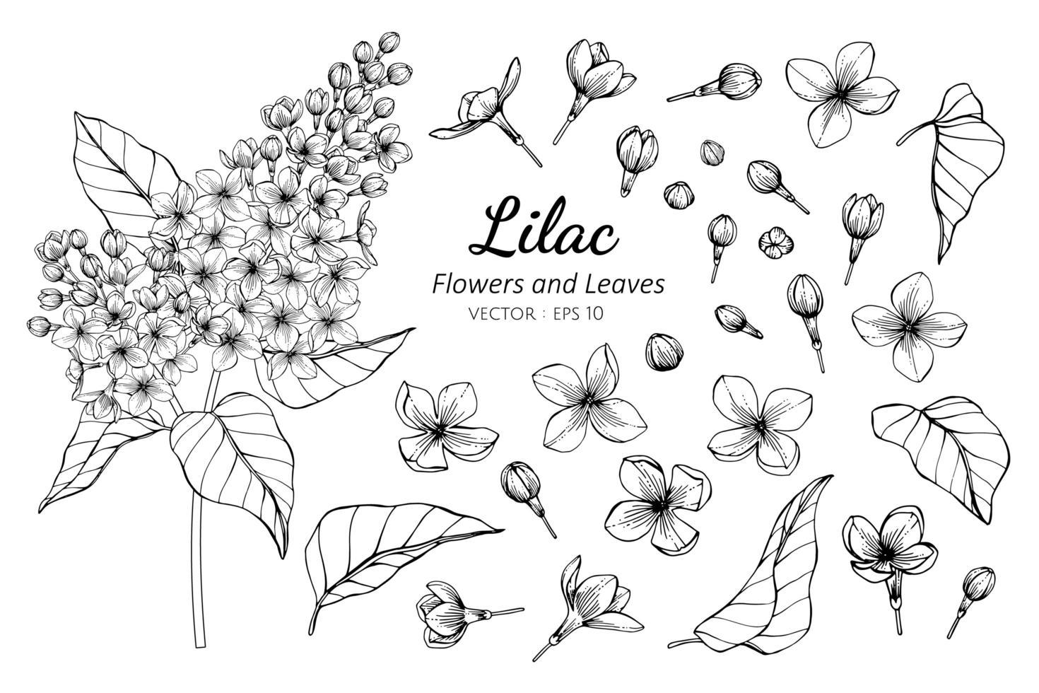 raccolta di fiori e foglie lilla vettore
