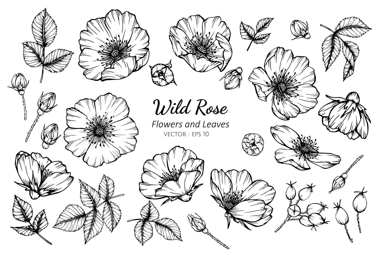 raccolta di rose e foglie selvatiche vettore