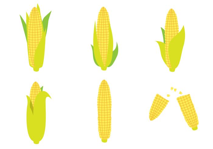 Set vettoriale di spiga di grano