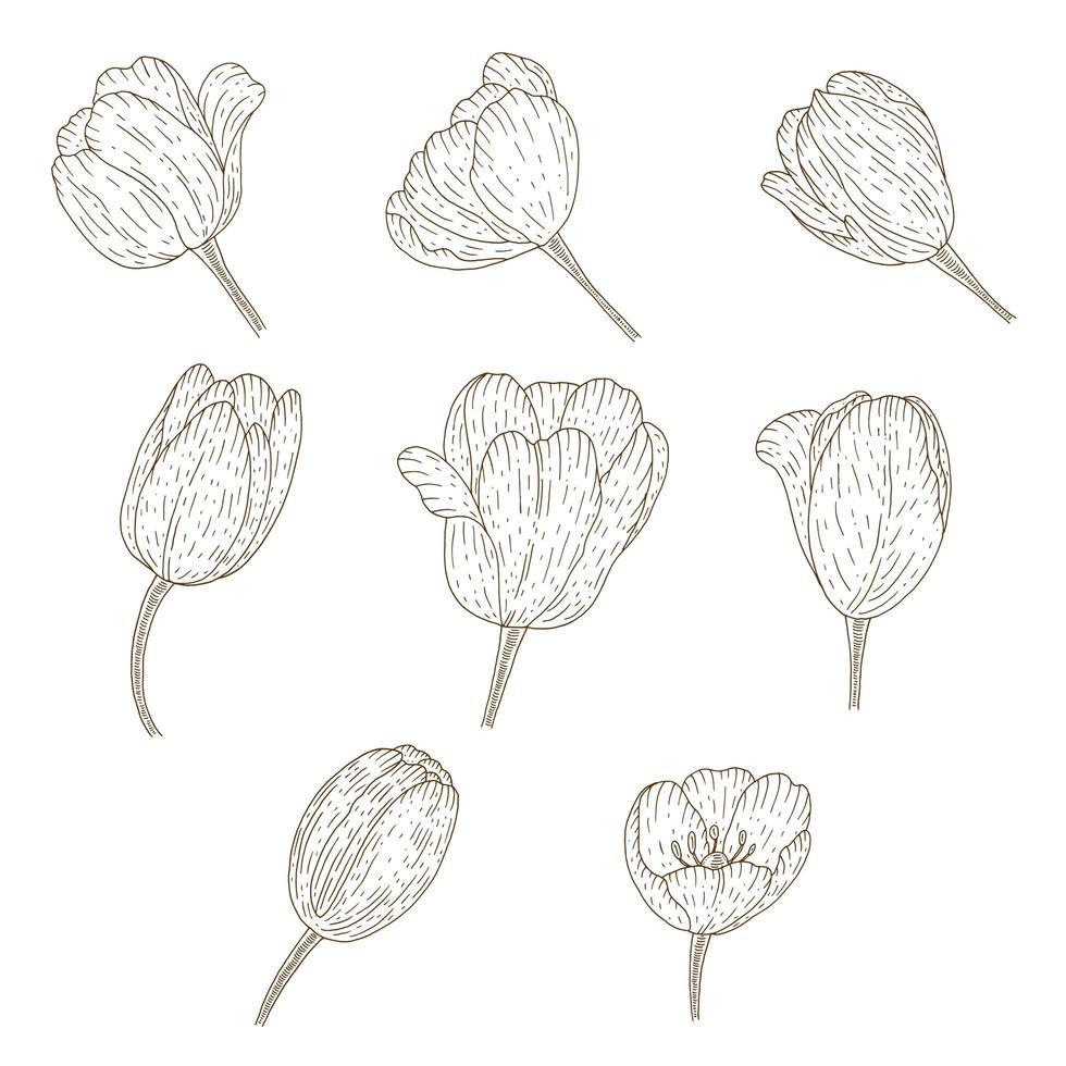 collezione di tulipani vintage vettore