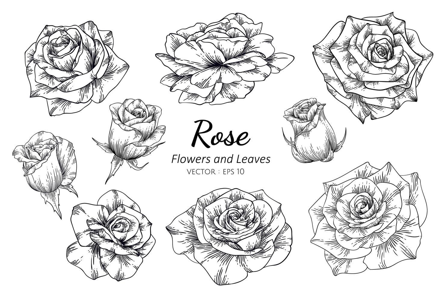 set di rose disegnate a mano vettore