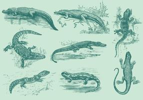 Lucertole e alligatori vettore