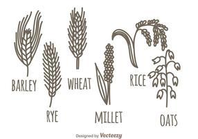 Set di piante di cereali vettore