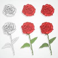 set di fiori e steli di rose vettore